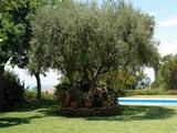 Виллы Испании Marbella лот v1208 фото 03